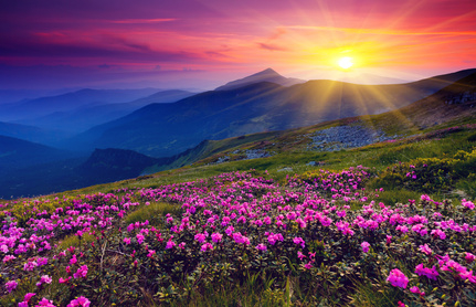 Longfellow's A Gleam of Sunshine
