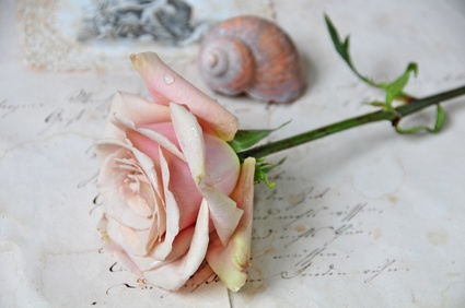 Rose and writing pic for thank you for coming poems
